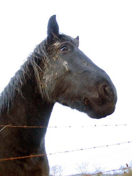 1wn20_cheval_bourgogne1