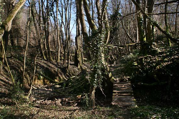 1ny_to Loire_chemin_bois