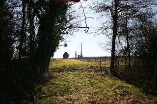 1ny_to Loire_arrivee_vignes
