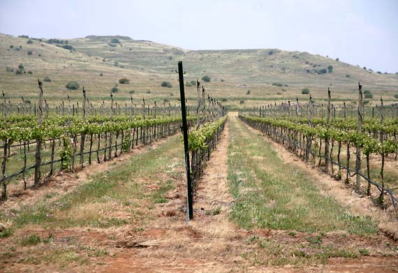 1il_pelter_golan_vineyards