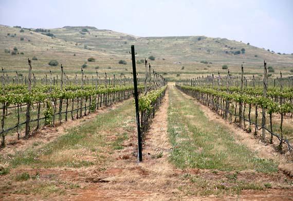 1il_pelter_golan_vineyards