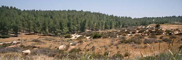 1yatir_forest_landscape