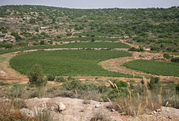1nir_grower_vineyards