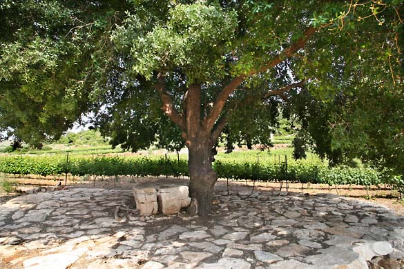 1nir_grower_tree_stone
