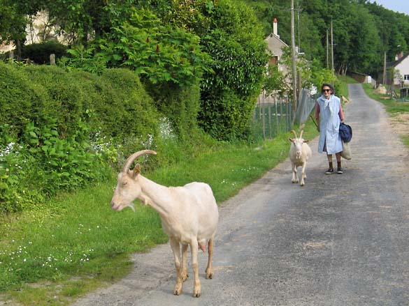 1wn_cheese_goats_woman