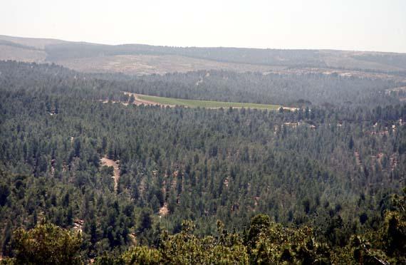 1yatir_vineyars_nestled_forest