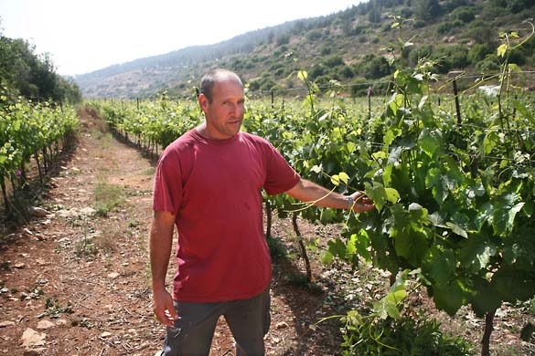 1nir_grower_portrait_vineyards