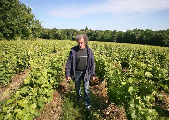 1barrouillet_marche_vigne_sauvignon
