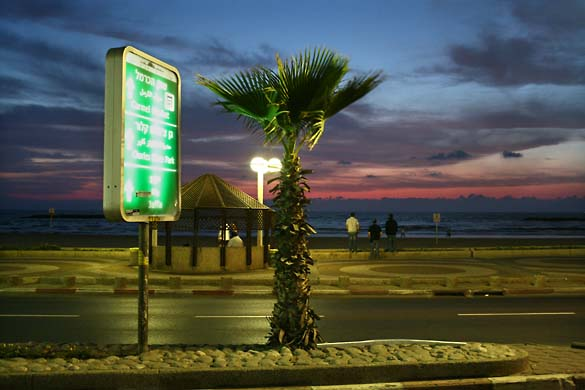 1tel_aviv_night_palm_tree