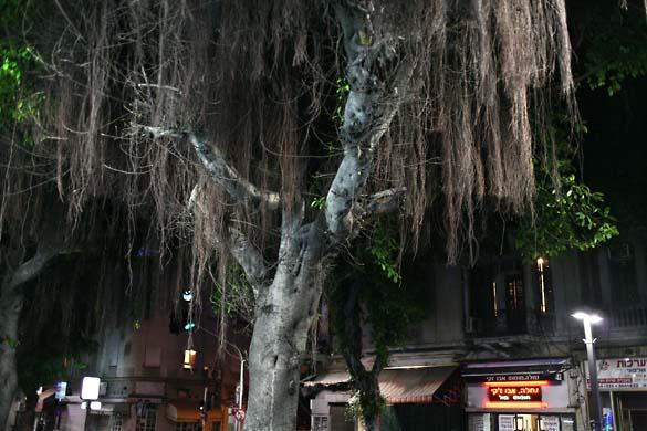 1tel_aviv_night_weeping_tree
