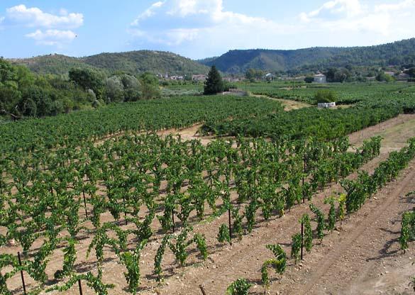 1correns_vineyards_village