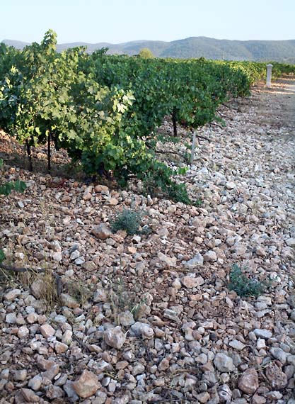 1reire_vineyard_stones