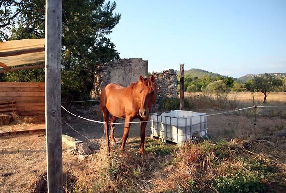 1reire_cheval_loube