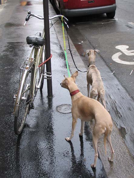 1animaux_chiens