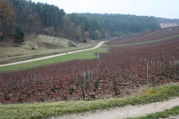 1horiot_riceys_bas_vineyards