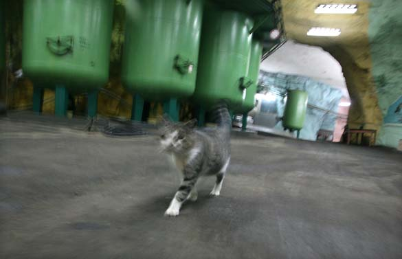 1Artyomovsk_patrolling_cat