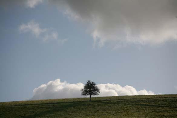 1roe_deer_wine_lone_tree