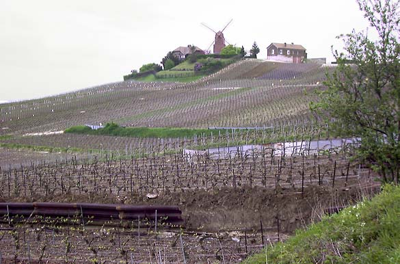 1mailly_champagne_vineyards_windmill