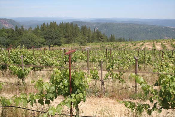 1renaissance_winery_vineyards_view