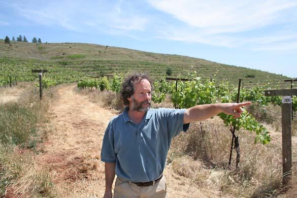 1renaissance_winery_beinstock_vineyard