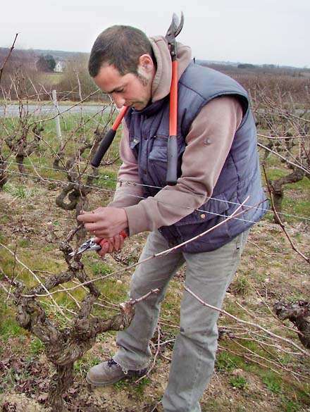 1saurigny_jerome_taille_vigne