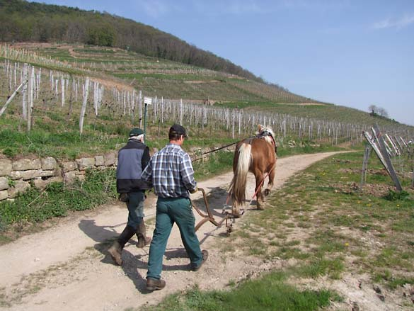 1horse_plowing_alsace_chemin