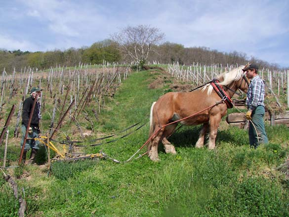 1horse_plowing_alsace_ready