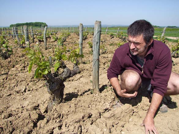 1mathieu_coste_vigne_gamay