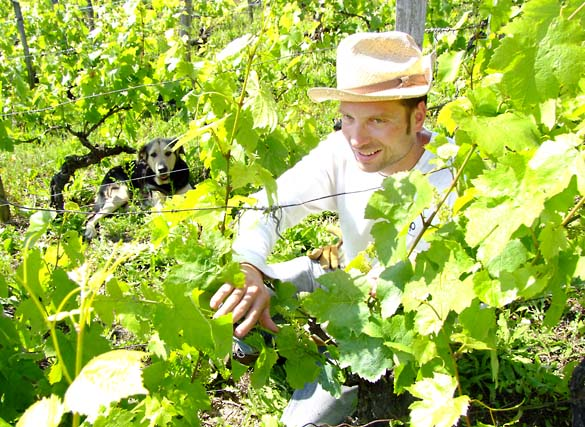 1bouju_boheme_vineyard_work