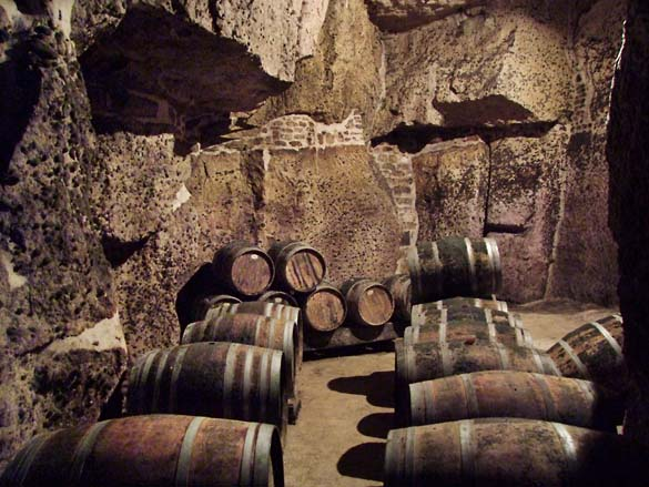 1ampelidae_les_roches_large_cellar_cave