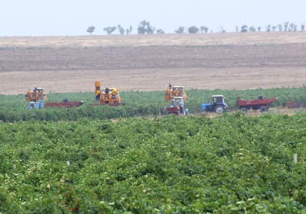 1tamagne_chai_combines_harvest