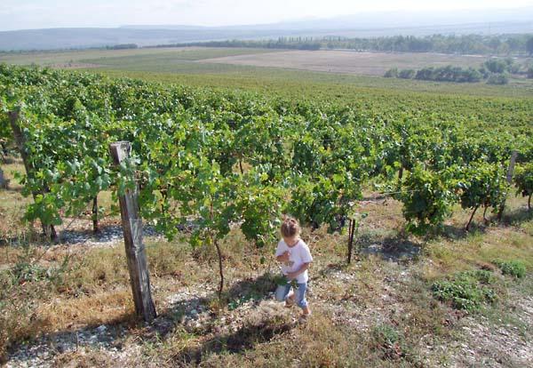 1semirorie_vineyard_slope