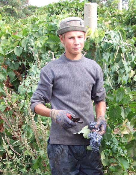 1russia_harvest_young_picker