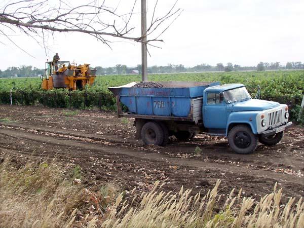 1russia_harvest_combine_truck