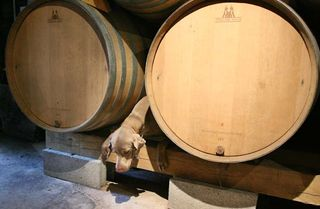 1ganevat_jura_dog_squeezed