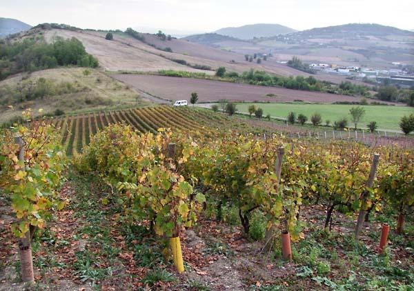 1vincent_marie_tricot_vines_hills