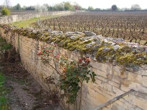 1JM_Roulot_wall_vineyard