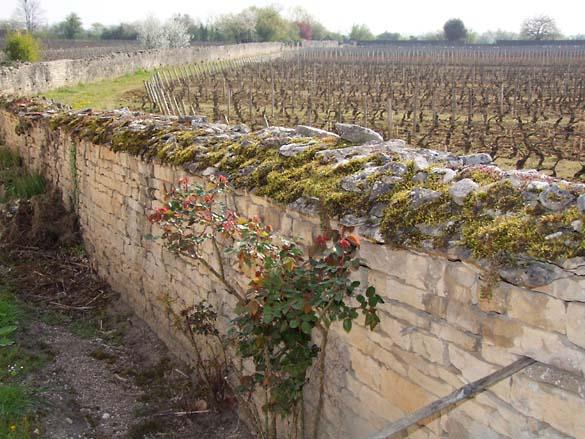 1JM_Roulot_wall_vineyard