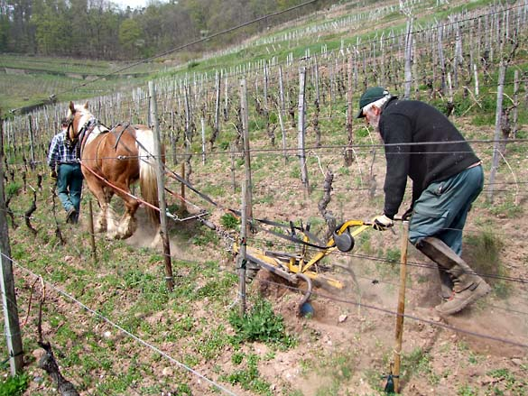 1horse_plowing_alsace_full_action