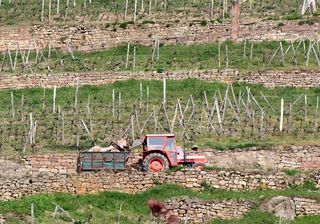 1horse_plowing_vineyard_tractor