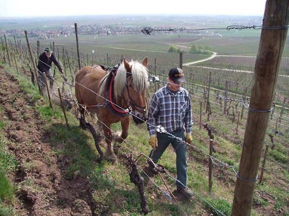 1horse_plowing_alsace_traction