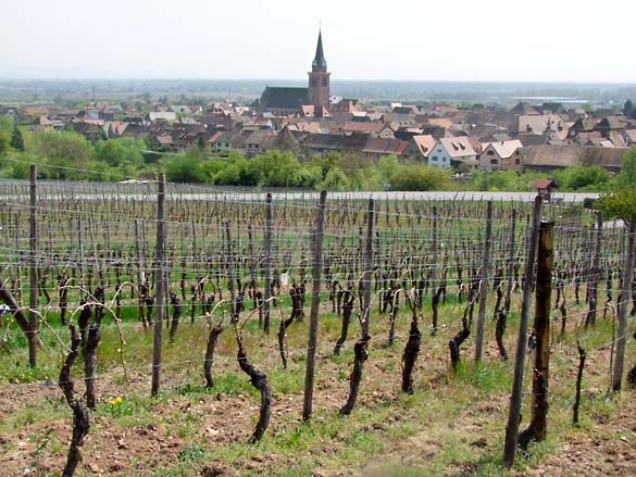 1deiss_vineyard_bergheim