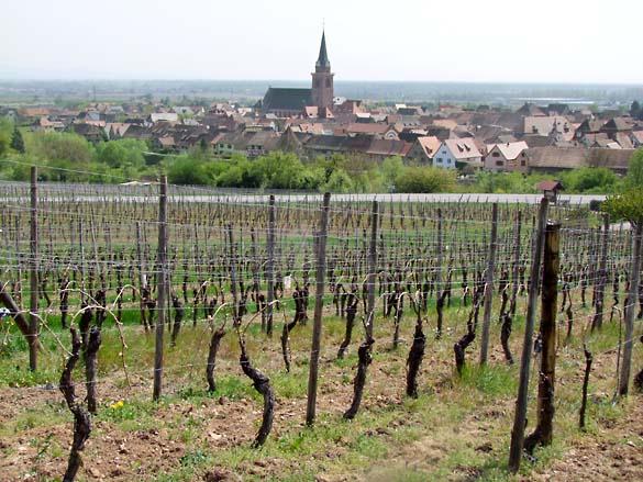 1deiss_vineyard_bergheim