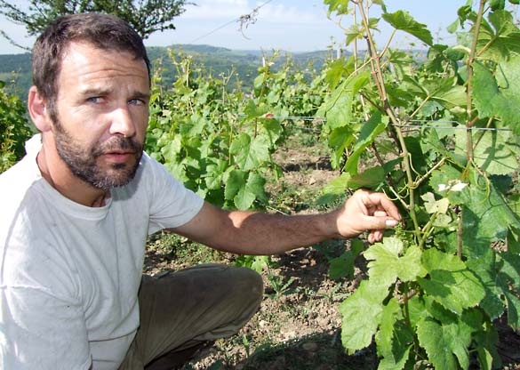 1pierre_beauger_vineyard_auvergne