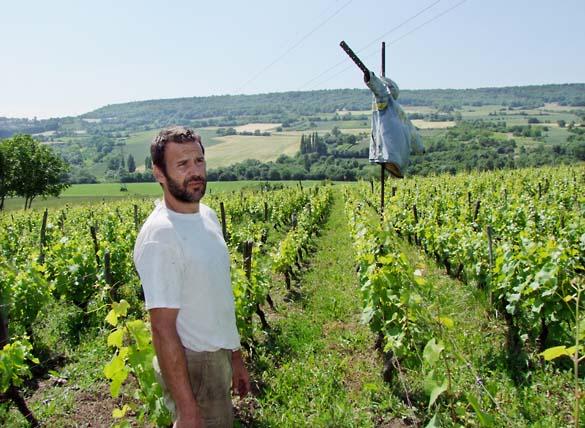 1pierre_beauger_jussat_vineyard