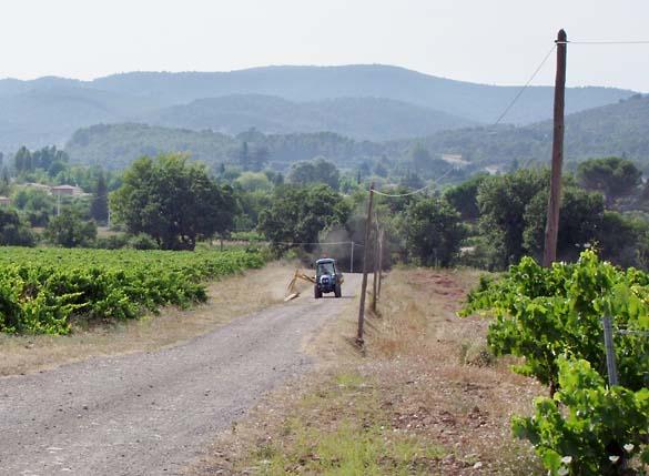 1rimauresq_vineyards