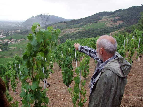 1allemand_showing_the_vineyards