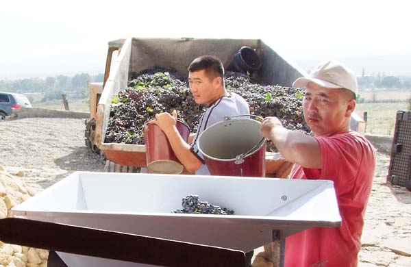 1semirorie_vineyard_workers