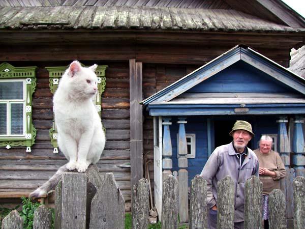 1russia_ulyanovsky_cat