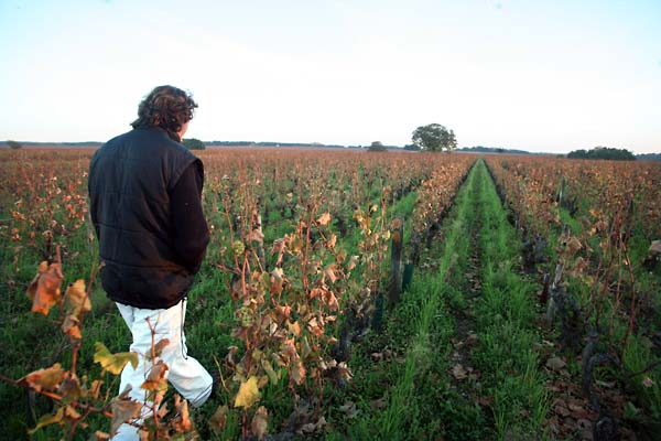 2bertrand_jousset_walking_montlouis_vineyard